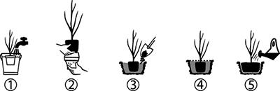 Réussir ses plantations etapes plantation WEB540175