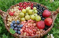 Panier Petits Fruits (17)